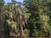 Mira hacia arriba verás (los manglares altos mundo)