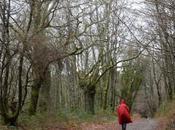 Camino inglés. Etapa Sigüeiro Santiago Compostela
