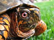 Resumen paso tortuga