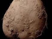 Pagan millón dólares retrato patata
