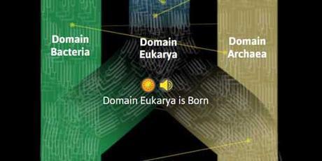 Cosillas sobre el origen de los eucariotas