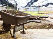 Cómo Hacer Bocashi Cultivo orgánico