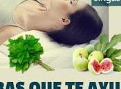 Hierbas Remedios Naturales para Aliviar Gastritis