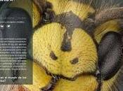 Happy #DarwinDay. influencia mundo insectos.