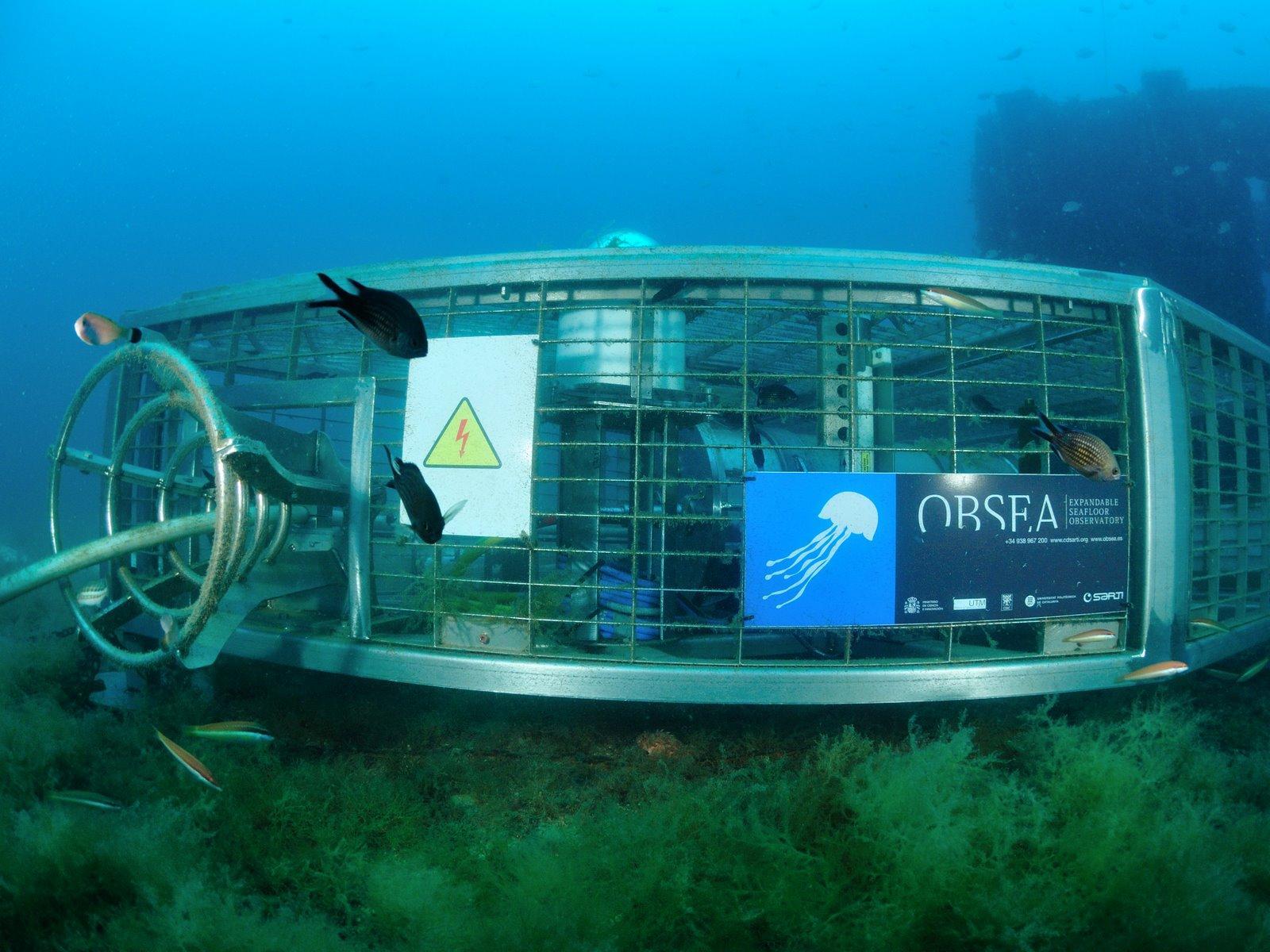 Miden la contaminación acústica marítima en tiempo real por internet