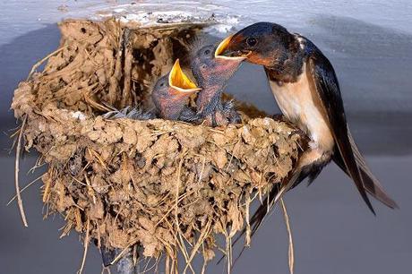 Huevos y nidos