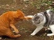 Ampliando familia, pautas presentación gatos