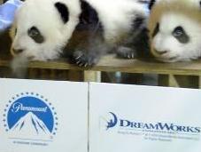 Imágenes bautizo nuevos Panda Madrid