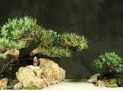 esto soñar bonsái.