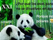 #HumorQuímico: ¿por osos panda disuelven agua?