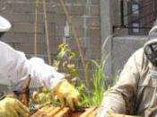 Beneficios, mitos leyendas apicultura urbana Benefits myths legends urban beekeeping,