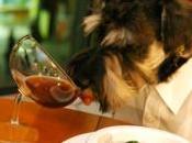 Mascotas restaurantes