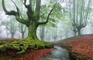 Parque Natural de Gorbeia Sarria