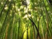 bosques impresionantes mundo