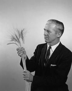 308px-Green_revolution_Wheat--Borlaug by CIMMYT