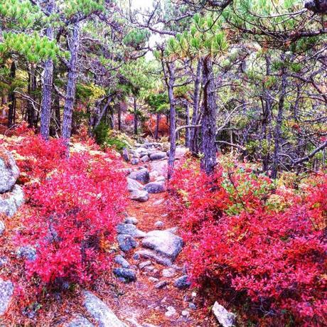 Acadia Magical Fall Foliage