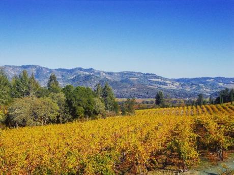 Viñedos de Napa Valley
