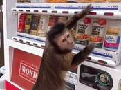 ¿Pueden máquinas vending ofrecer alimentos bebidas saludables?