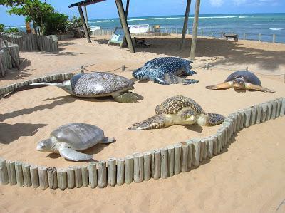 Tipos de tortugas, Proyecto Tamar, Praia do Forte, Brasil, La vuelta al mundo de Asun y Ricardo, round the world, mundoporlibre.com