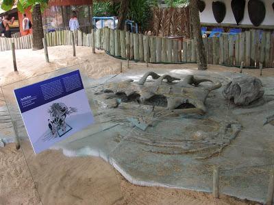 Esqueleto tortuga gigante, Proyecto Tamar, Praia do Forte, Brasil, La vuelta al mundo de Asun y Ricardo, round the world, mundoporlibre.com