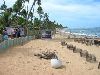 Nidos tortuga, Proyecto Tamar, Praia do Forte, Brasil, La vuelta al mundo de Asun y Ricardo, round the world, mundoporlibre.com