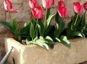 Terapia hortícola beneficios jardin para salud