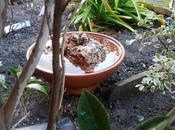 Bañeras bebederos para pájaros jardín