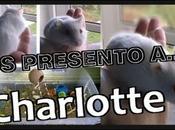 presento a... Charlotte!