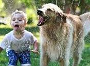¿Cómo perros cuidan?