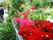 Cinco consejos para comprar plantas