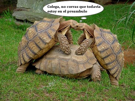 animales make love