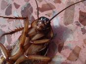 ¿Dónde esconden cucarachas? nidos secretos