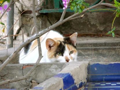 Los gatos del jard n bot nico de valencia y otros for Ahuyentar gatos del jardin