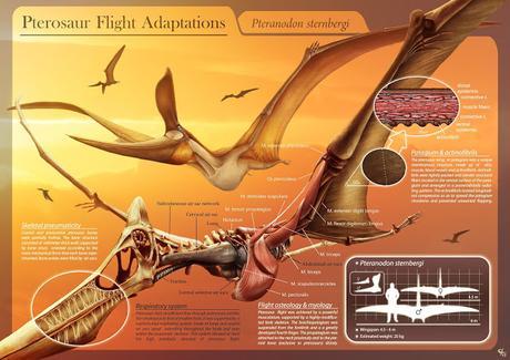Mitos e ideas falsas de los pterosaurios