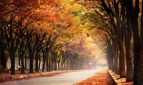 Walk in the Autumn de Jaewoon U en 500px.com