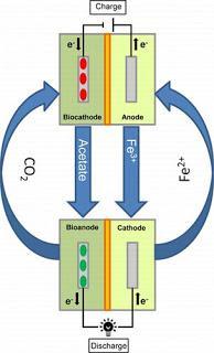 ¿Baterías biológicas? Estas bacterias pueden crear un mundo basado en energías renovables