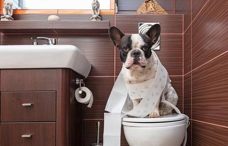 Hay ciertas cosas que podemos hacer para enseñar a nuestros cachorros a usar el baño