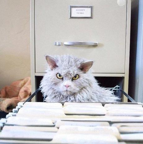 El gato más enfadado de Internet