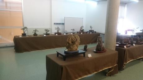 Exposición de la ASOCIACIÓ BONSAI DEL VALLES a Can Palet 2016