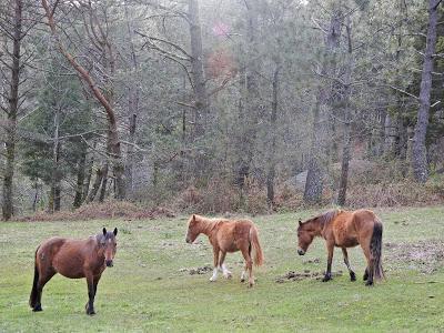 Cruzabicos en el Parque Natural Monte Aloia