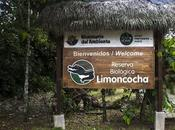 Limoncocha, laguna irreductible
