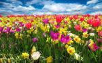La no primavera