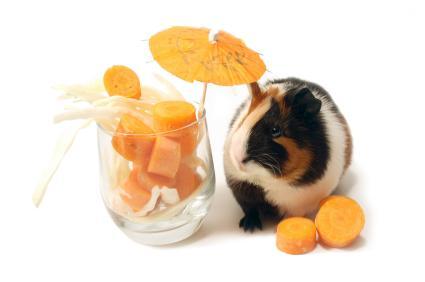 Snacks para cobayas, ¿qué son y cuáles hay?