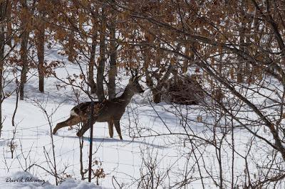 Al invierno no se lo come el lobo