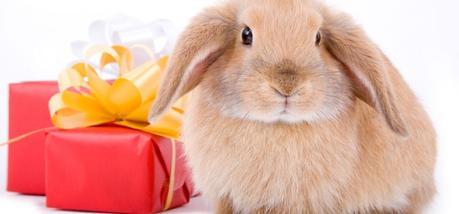 ¡Un día de conejos!