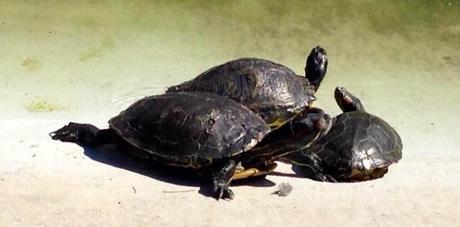 tortugas, foto del día, Universidad Alicante, blog diario, solo yo, blog solo yo,