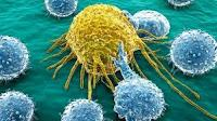 Como se Comunican las Celulas Cancerigenas con las Sanas