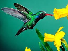 sueño con un colibrí