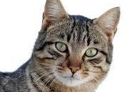 origen gatos domésticos