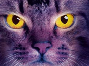 Medianoche (Erin Hunter)